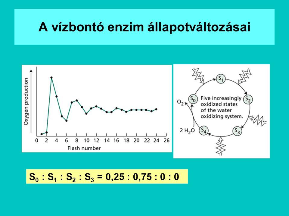 A vízbontó enzim állapotváltozásai