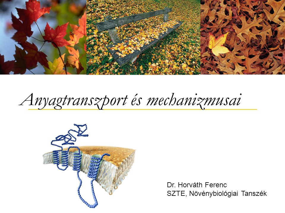 Anyagtranszport és mechanizmusai