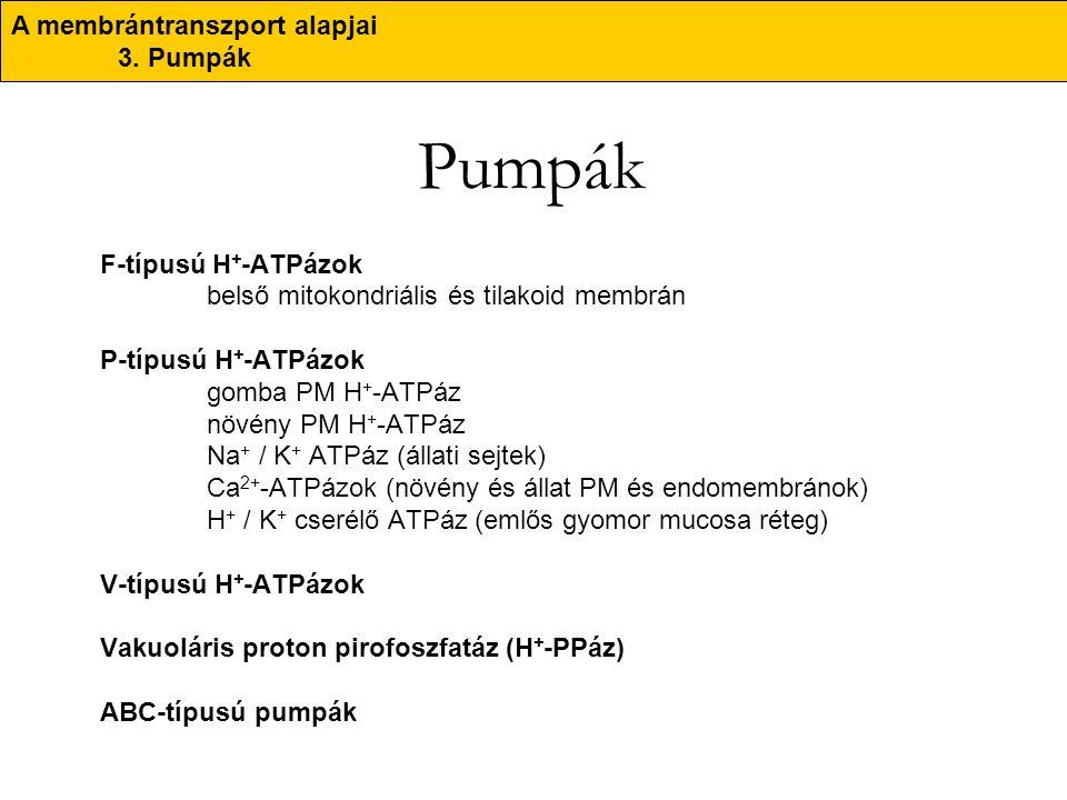Pumpák A membrántranszport alapjai 3. Pumpák F-típusú H+-ATPázok