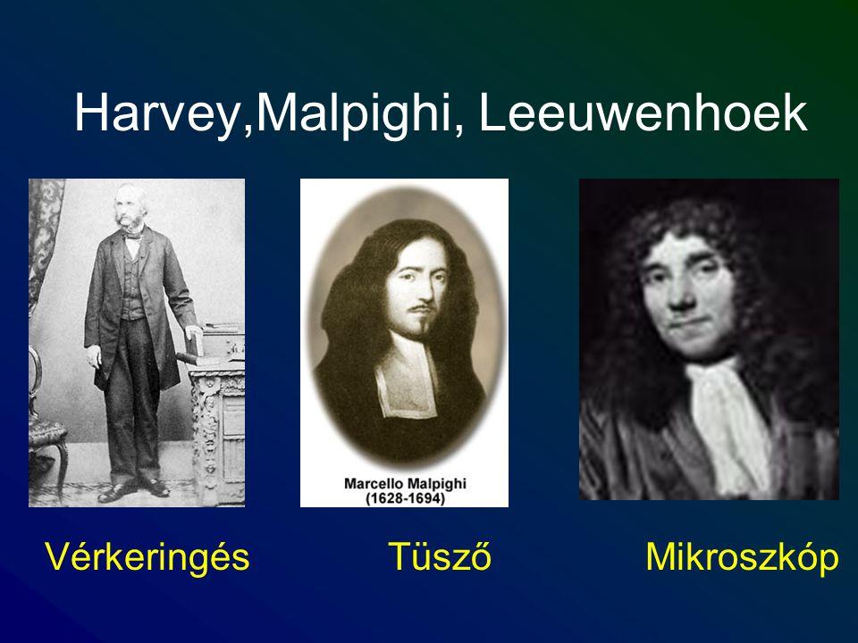 Harvey,Malpighi, Leeuwenhoek