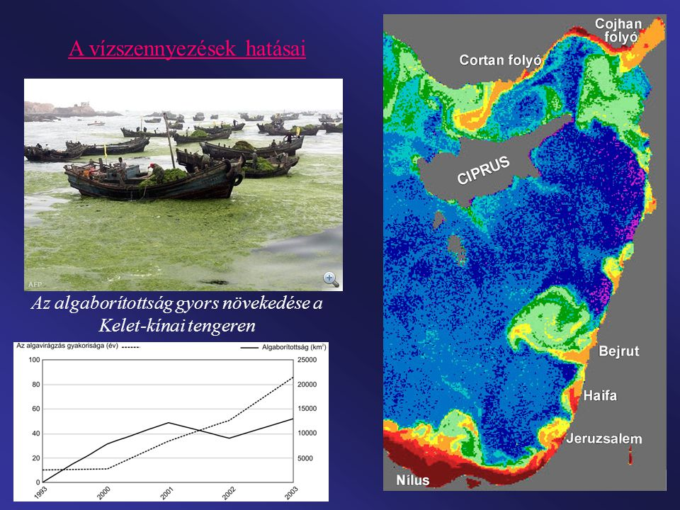 Az algaborítottság gyors növekedése a Kelet-kínai tengeren