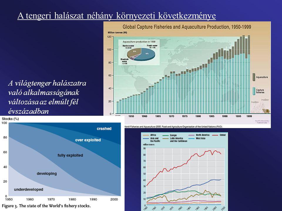 A tengeri halászat néhány környezeti következménye