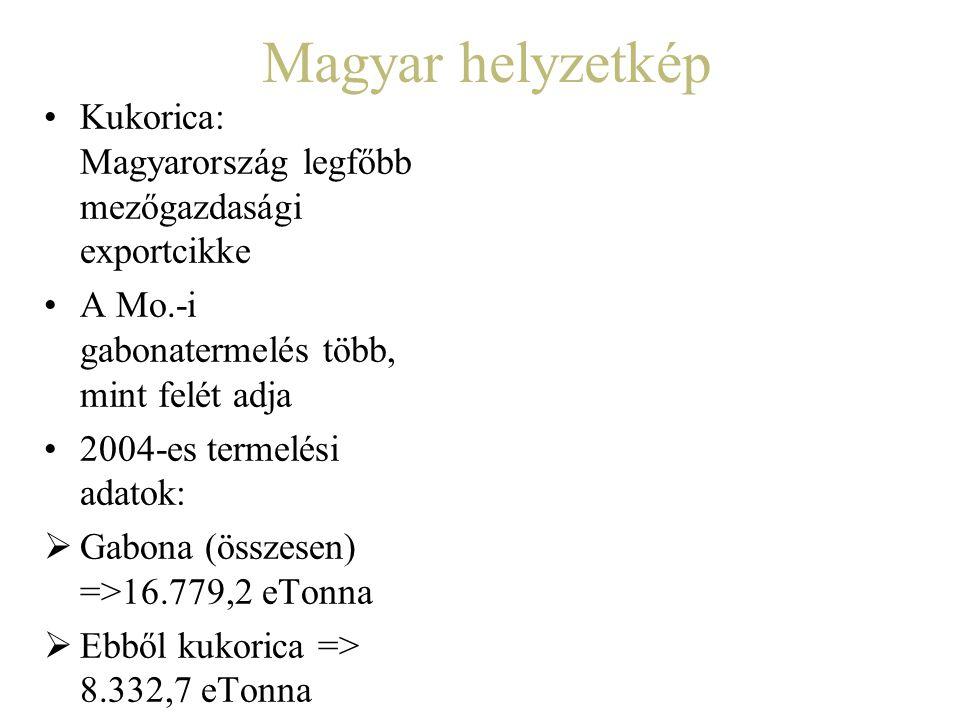 Magyar helyzetkép Kukorica: Magyarország legfőbb mezőgazdasági exportcikke. A Mo.-i gabonatermelés több, mint felét adja.