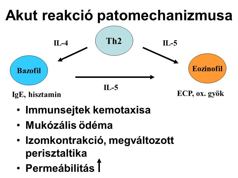 Akut reakció patomechanizmusa