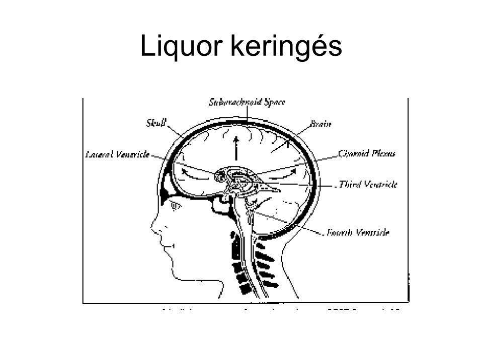 Liquor keringés