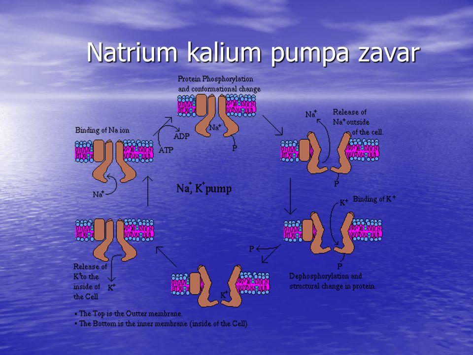 Natrium kalium pumpa zavar