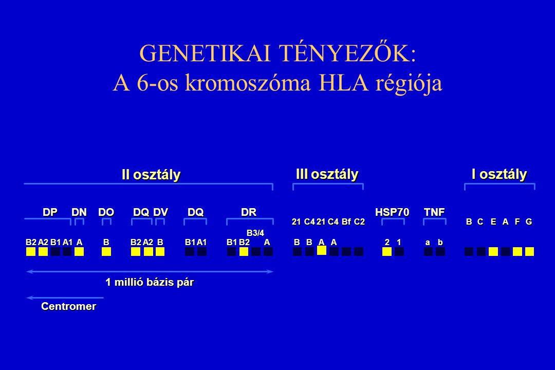 GENETIKAI TÉNYEZŐK: A 6-os kromoszóma HLA régiója