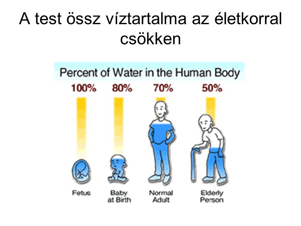 A test össz víztartalma az életkorral csökken