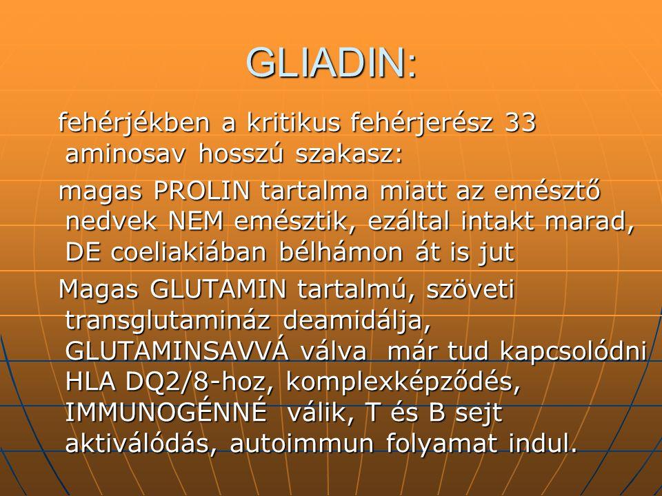 GLIADIN: fehérjékben a kritikus fehérjerész 33 aminosav hosszú szakasz:
