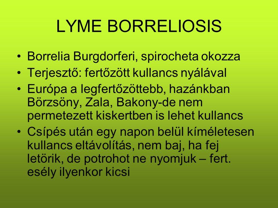 LYME BORRELIOSIS Borrelia Burgdorferi, spirocheta okozza