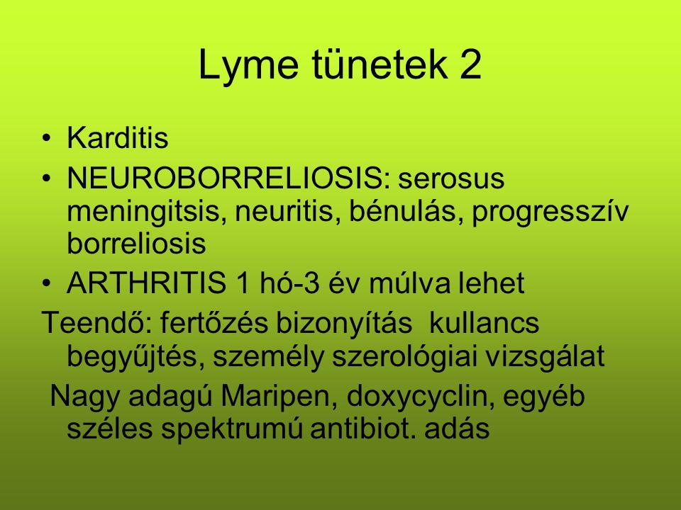 Lyme tünetek 2 Karditis. NEUROBORRELIOSIS: serosus meningitsis, neuritis, bénulás, progresszív borreliosis.