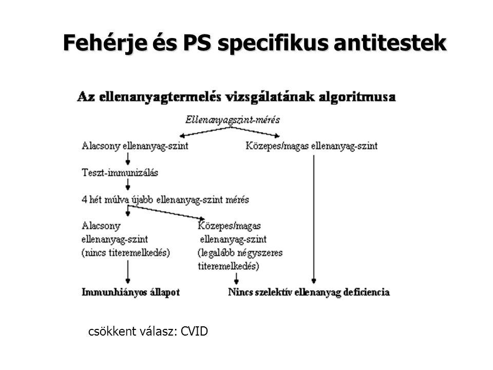 Fehérje és PS specifikus antitestek