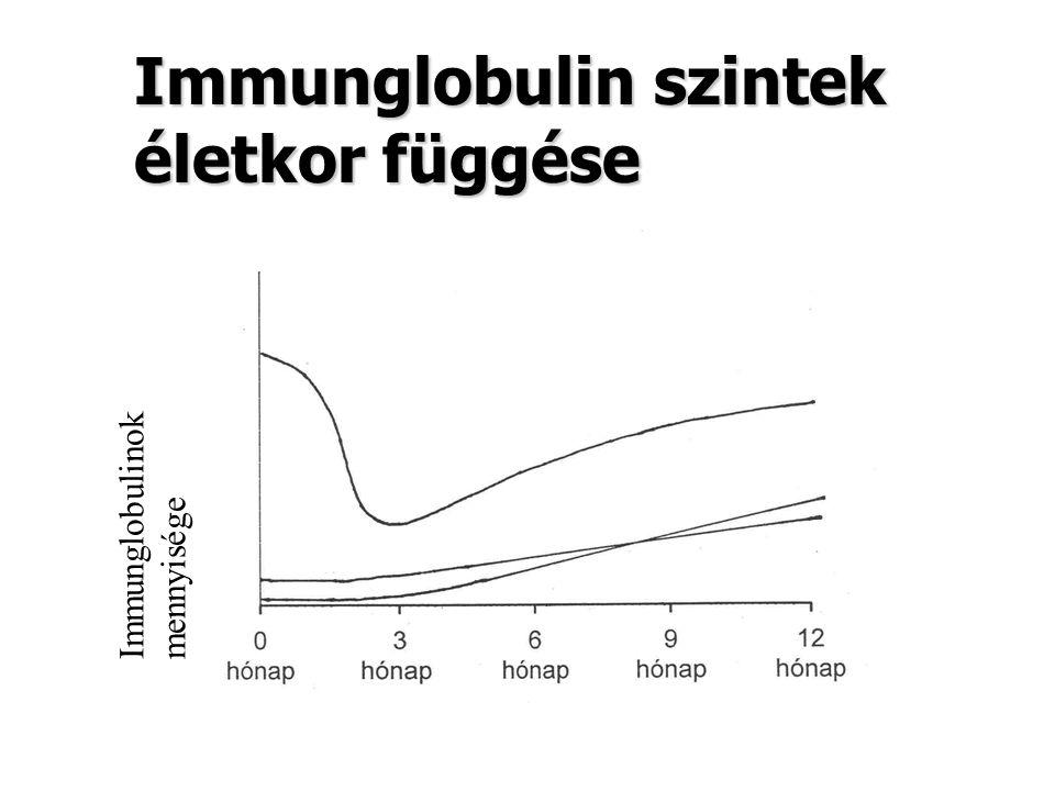 Immunglobulin szintek életkor függése