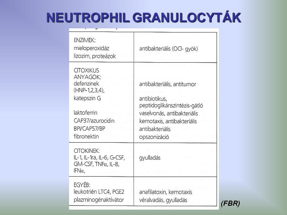 NEUTROPHIL GRANULOCYTÁK