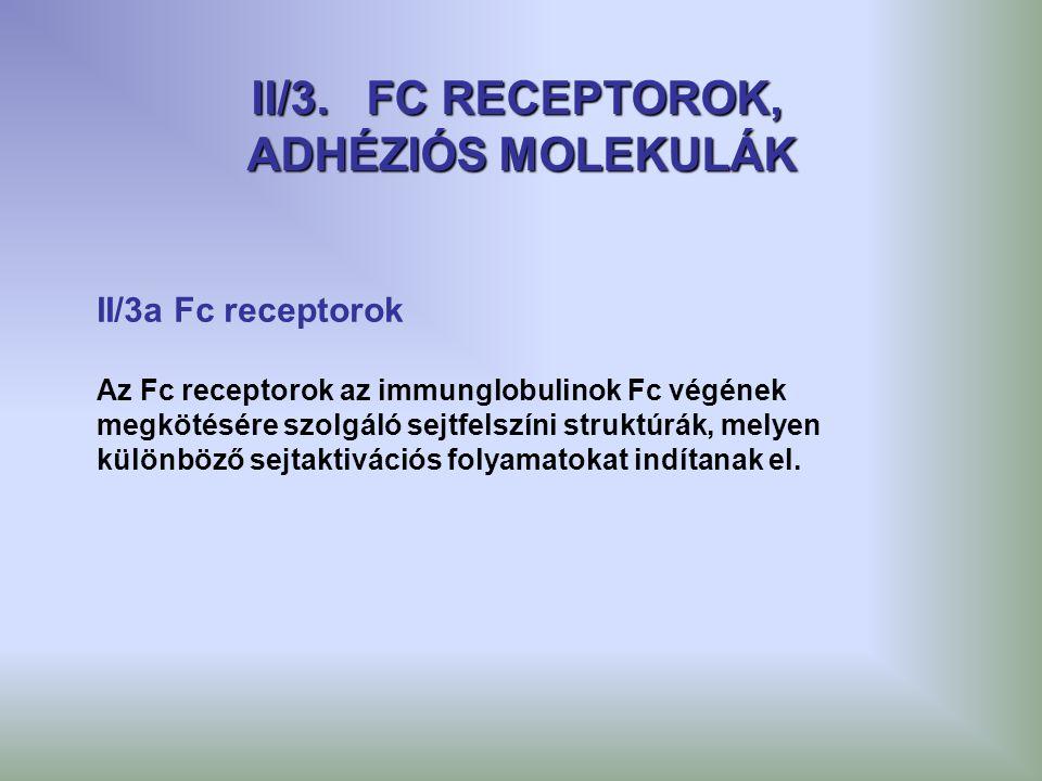 II/3. FC RECEPTOROK, ADHÉZIÓS MOLEKULÁK