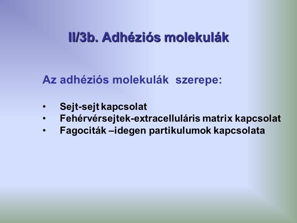 II/3b. Adhéziós molekulák