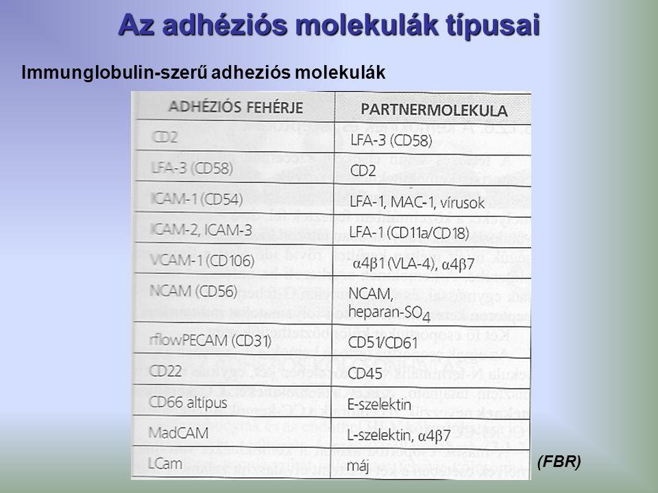 Az adhéziós molekulák típusai