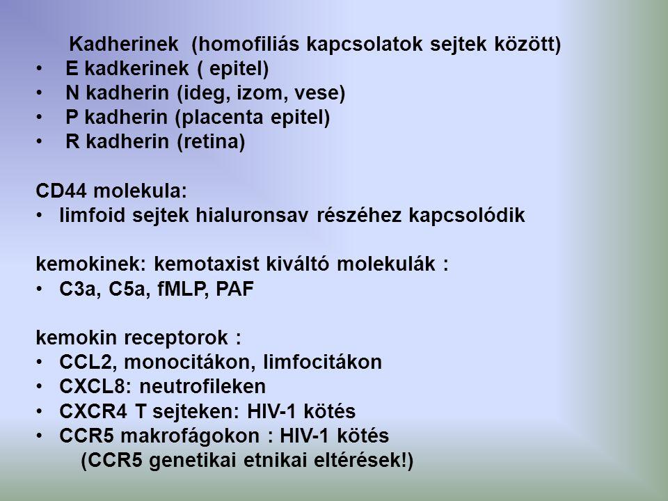 Kadherinek (homofiliás kapcsolatok sejtek között)