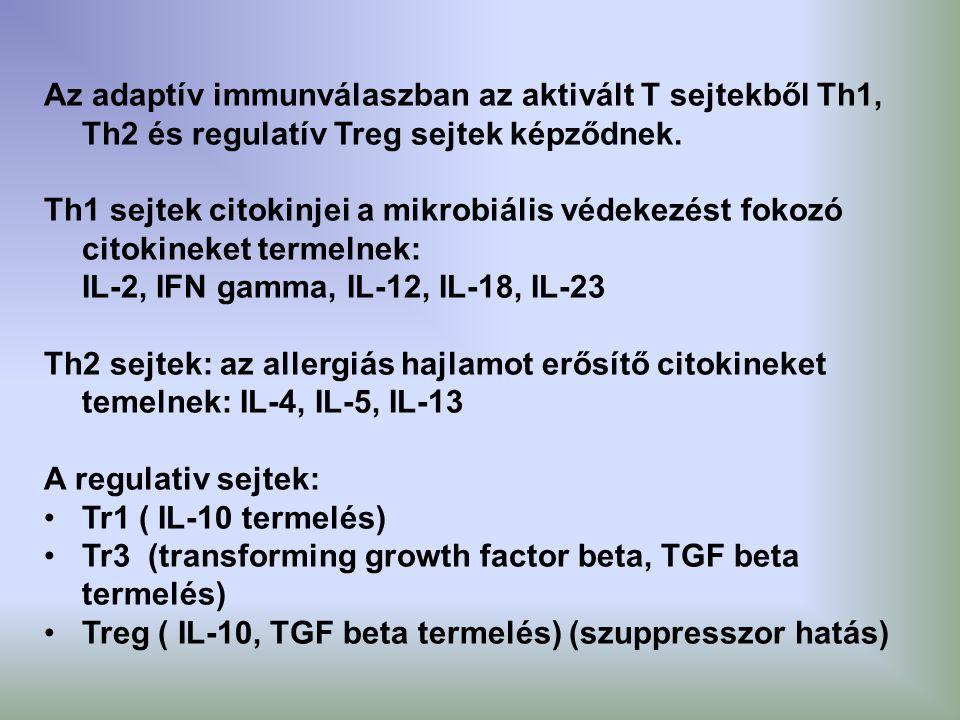 Az adaptív immunválaszban az aktivált T sejtekből Th1, Th2 és regulatív Treg sejtek képződnek.
