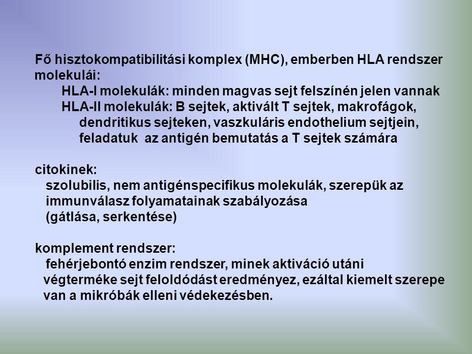 Fő hisztokompatibilitási komplex (MHC), emberben HLA rendszer molekulái: