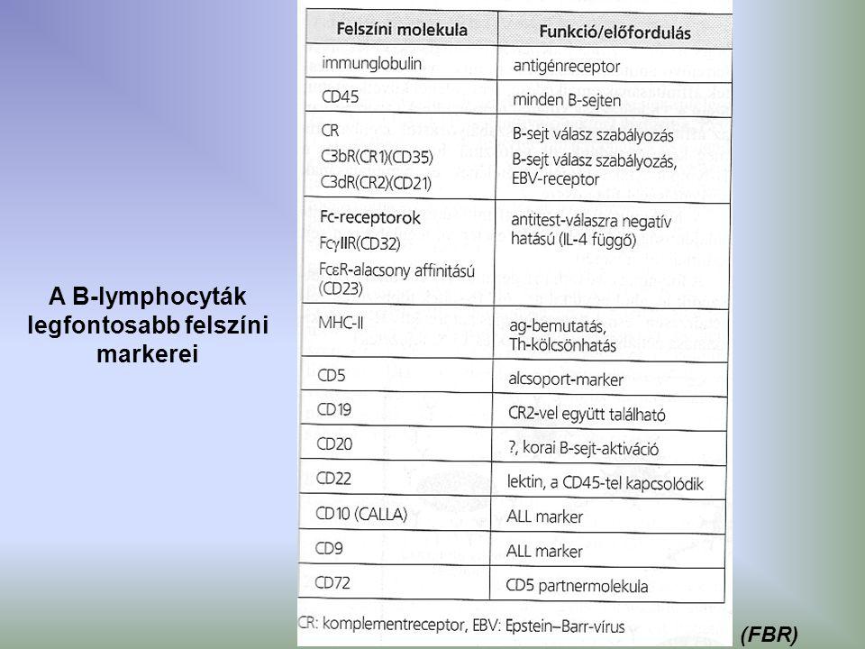 A B-lymphocyták legfontosabb felszíni markerei