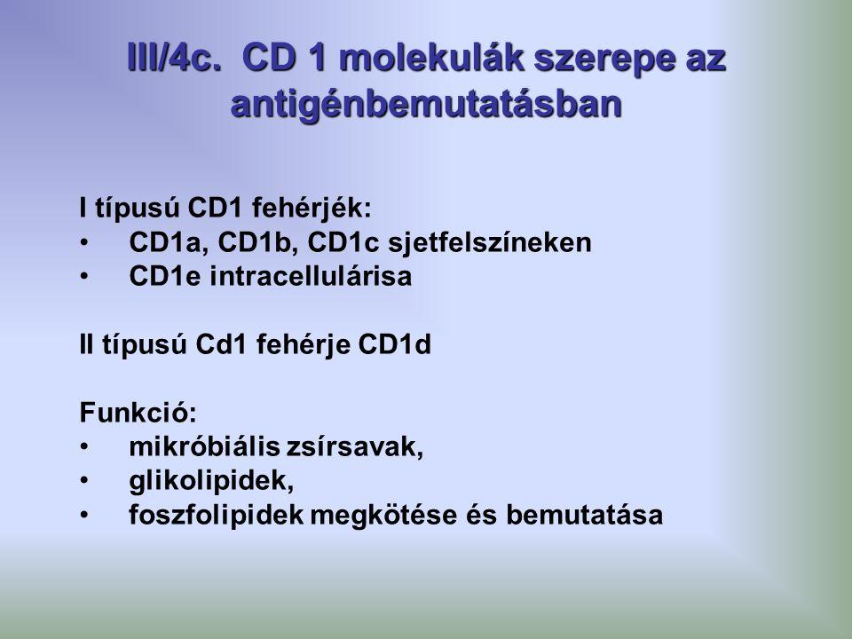 III/4c. CD 1 molekulák szerepe az antigénbemutatásban