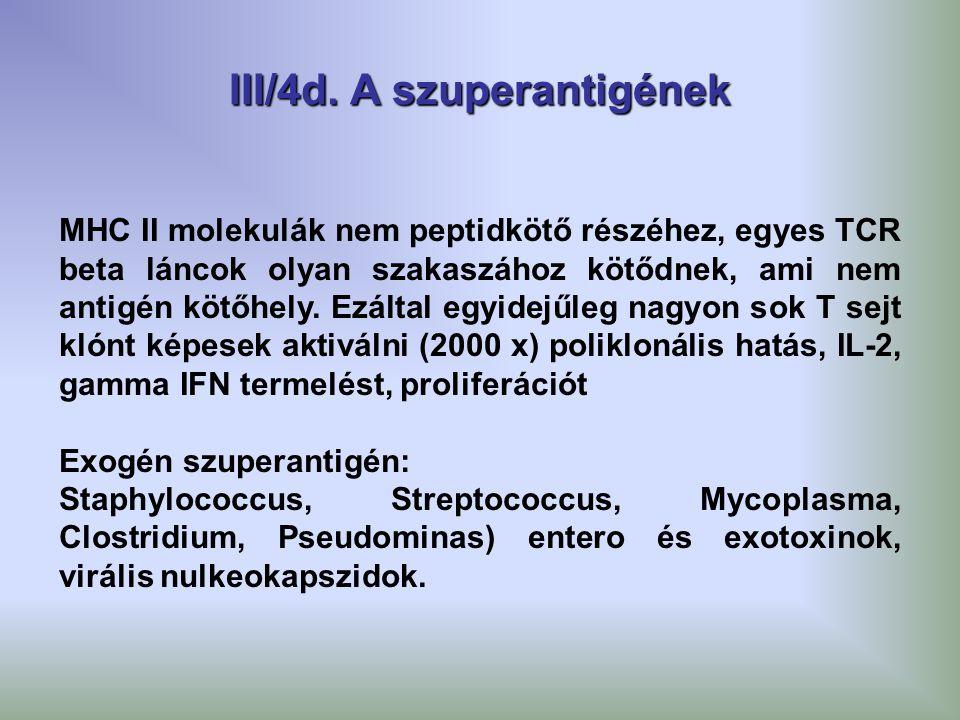 III/4d. A szuperantigének