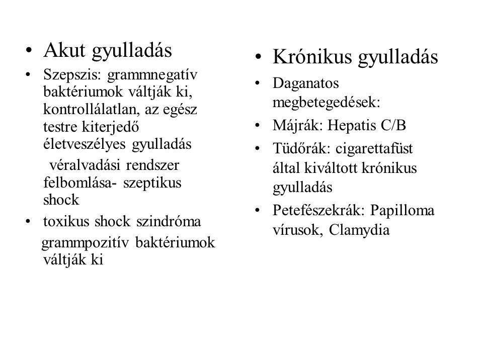 Akut gyulladás Krónikus gyulladás