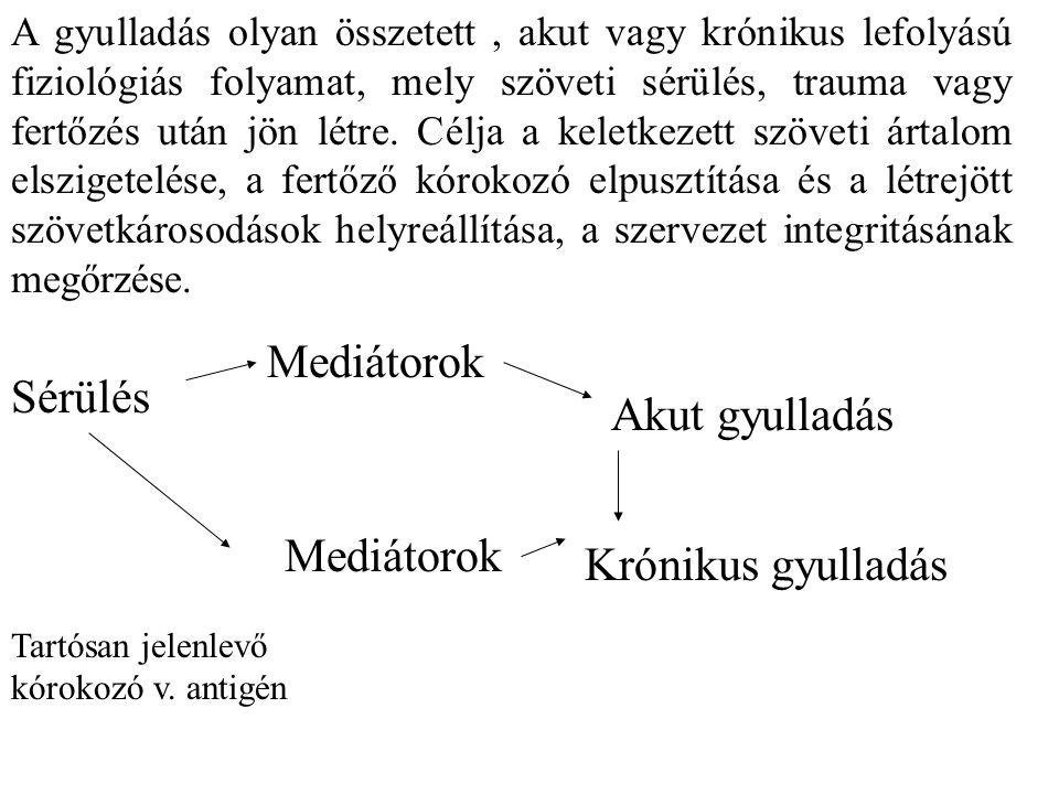 Mediátorok Sérülés Akut gyulladás Mediátorok Krónikus gyulladás