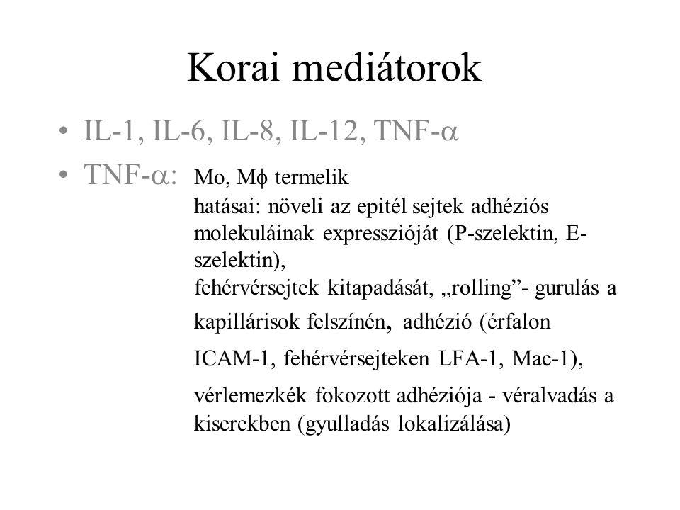 Korai mediátorok IL-1, IL-6, IL-8, IL-12, TNF-a