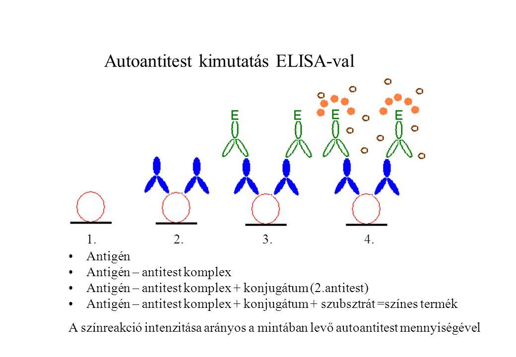 Autoantitest kimutatás ELISA-val