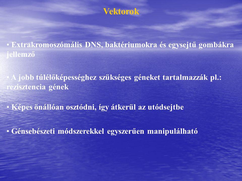 Vektorok Extrakromoszómális DNS, baktériumokra és egysejtű gombákra jellemző.