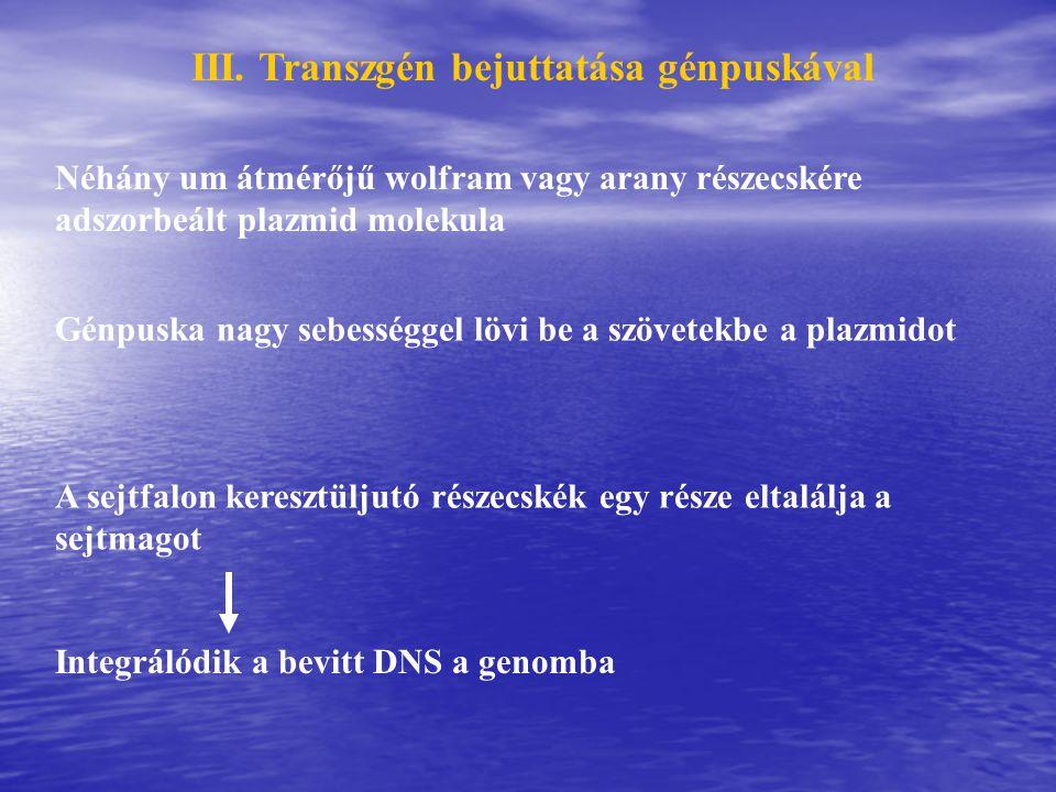 III. Transzgén bejuttatása génpuskával