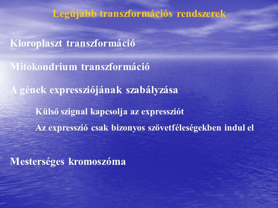 Legújabb transzformációs rendszerek