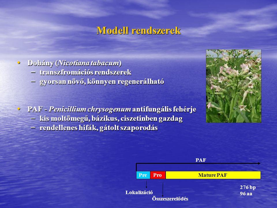 Modell rendszerek Dohány (Nicotiana tabacum)