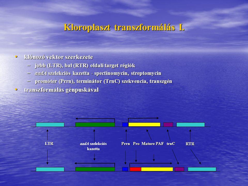 Kloroplaszt transzformálás I.