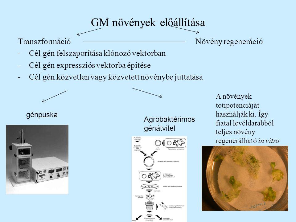 GM növények előállítása