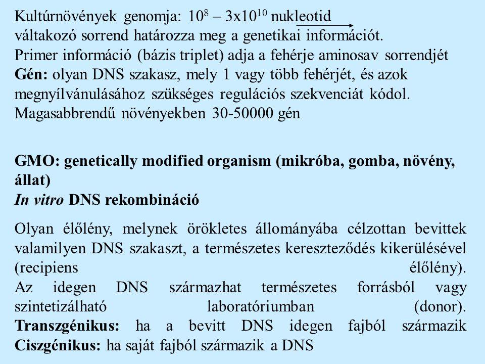 Kultúrnövények genomja: 108 – 3x1010 nukleotid váltakozó sorrend határozza meg a genetikai információt. Primer információ (bázis triplet) adja a fehérje aminosav sorrendjét Gén: olyan DNS szakasz, mely 1 vagy több fehérjét, és azok megnyílvánulásához szükséges regulációs szekvenciát kódol. Magasabbrendű növényekben 30-50000 gén