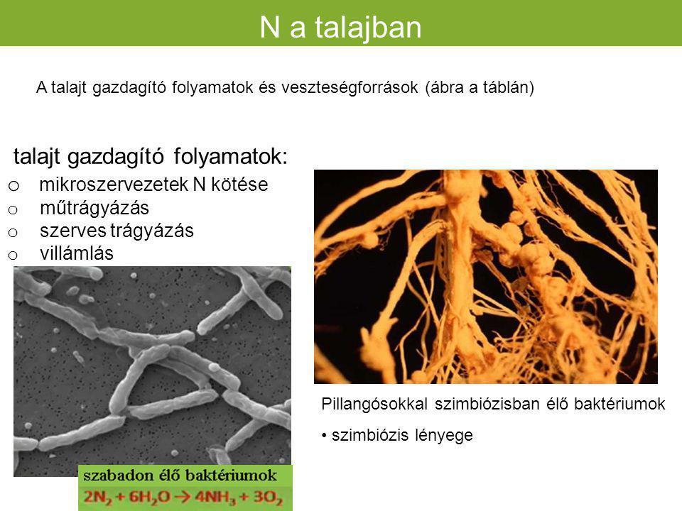 N a talajban talajt gazdagító folyamatok: mikroszervezetek N kötése