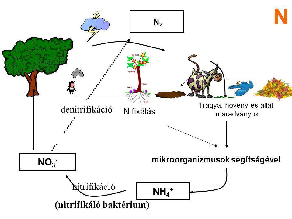 mikroorganizmusok segítségével
