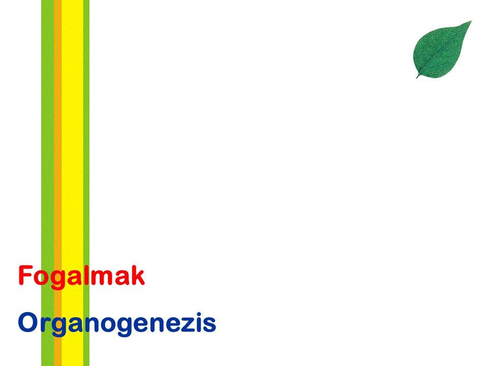 Fogalmak Organogenezis