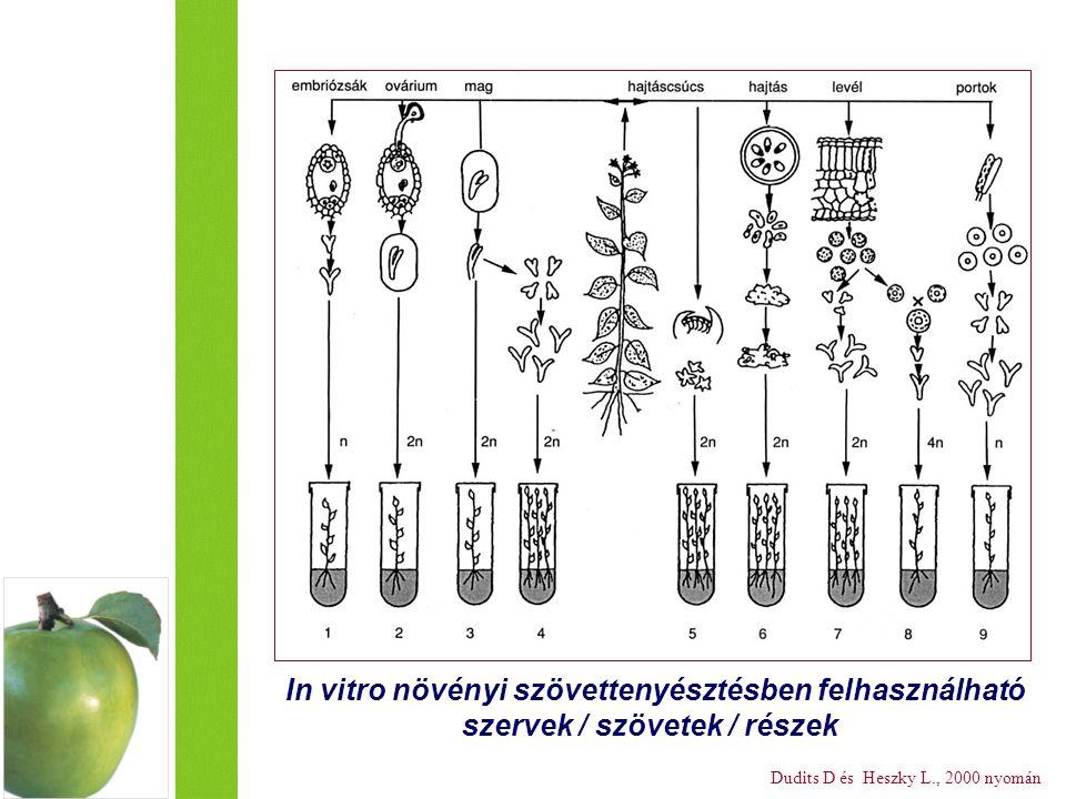 In vitro növényi szövettenyésztésben felhasználható