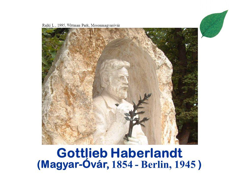 Gottlieb Haberlandt (Magyar-Óvár, 1854 - Berlin, 1945 )