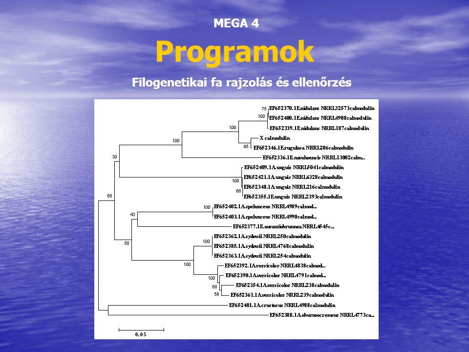 Programok MEGA 4 Filogenetikai fa rajzolás és ellenőrzés