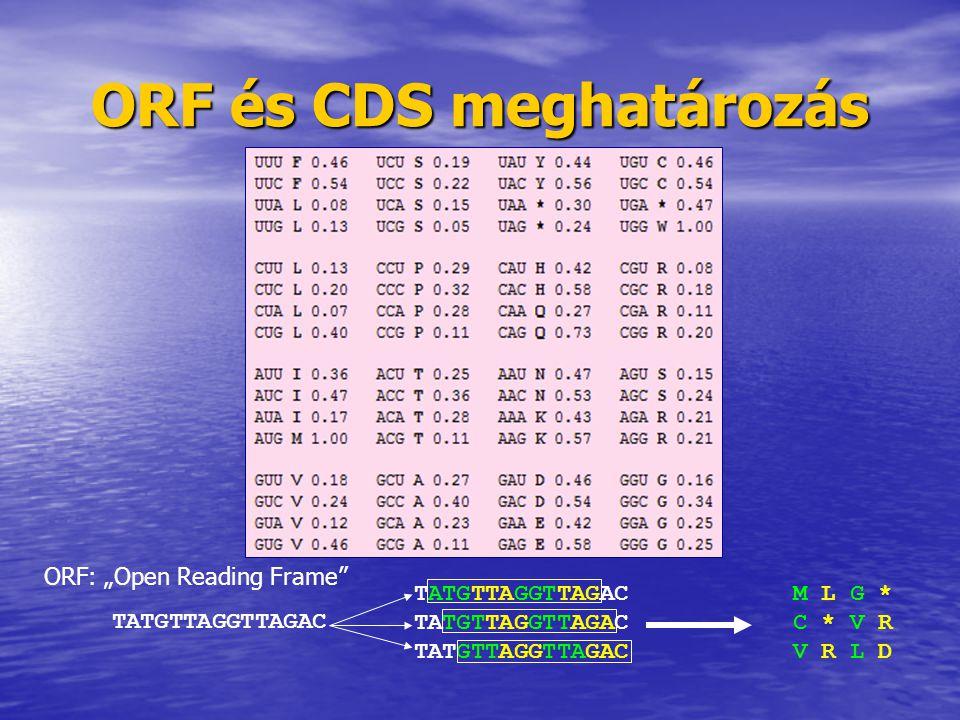 ORF és CDS meghatározás