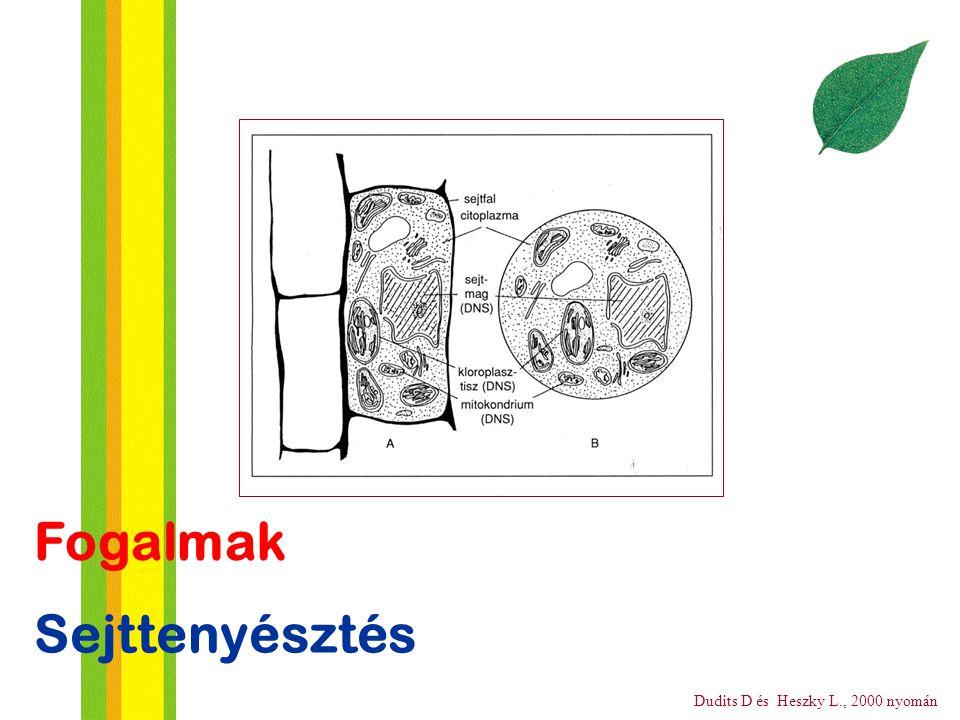 Fogalmak Sejttenyésztés Dudits D és Heszky L., 2000 nyomán