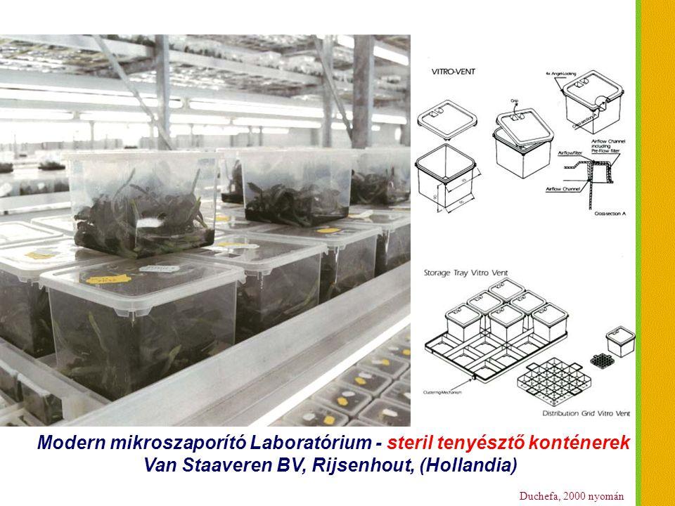 Modern mikroszaporító Laboratórium - steril tenyésztő konténerek