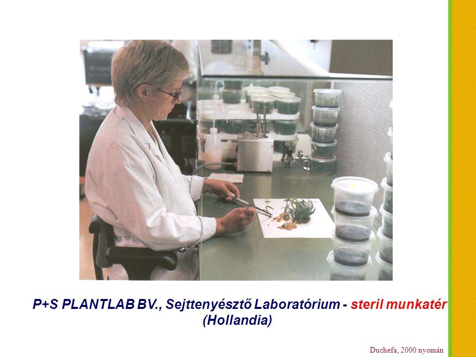 P+S PLANTLAB BV., Sejttenyésztő Laboratórium - steril munkatér