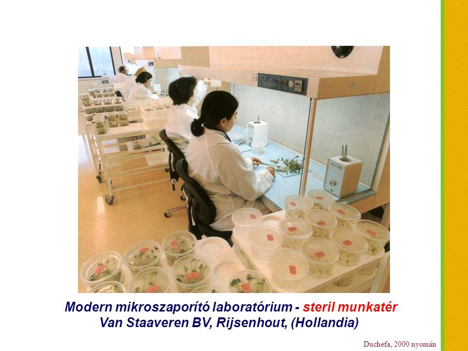 Modern mikroszaporító laboratórium - steril munkatér