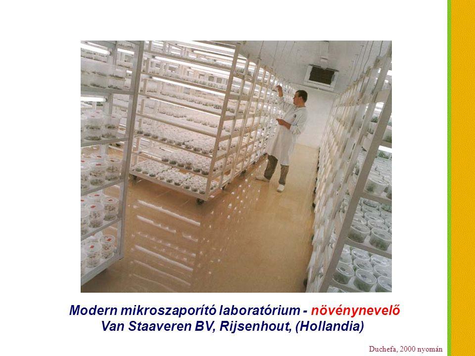 Modern mikroszaporító laboratórium - növénynevelő